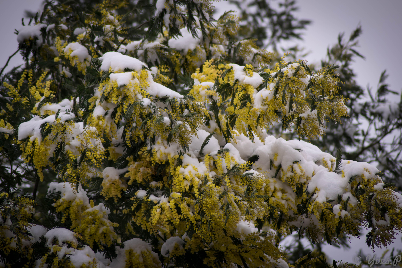 Orthez sous la neige 28/2/2018